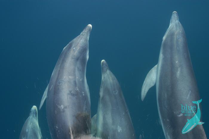 Bottle dolphin